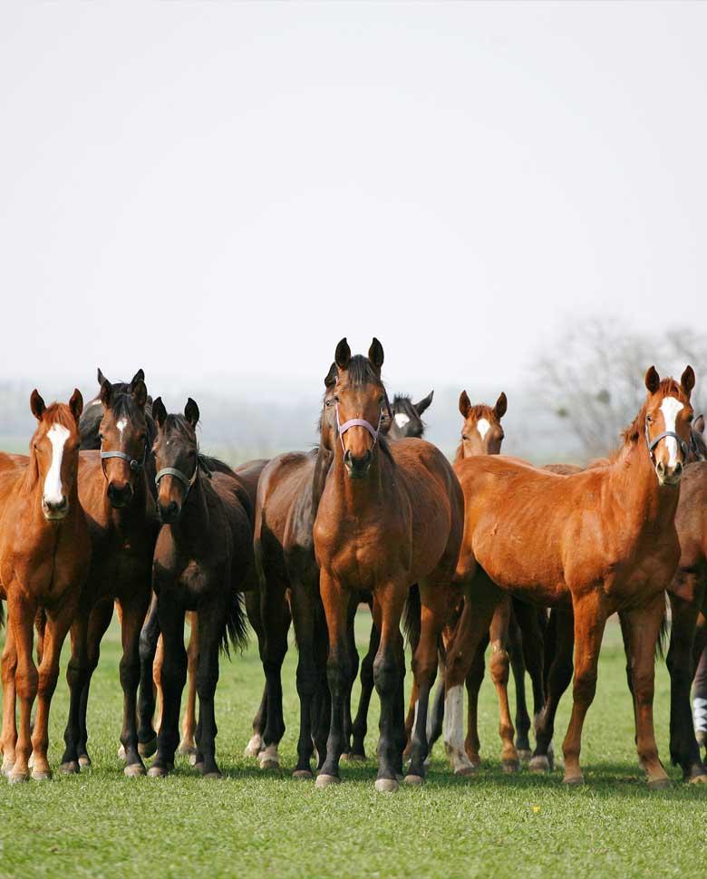 start_pferde